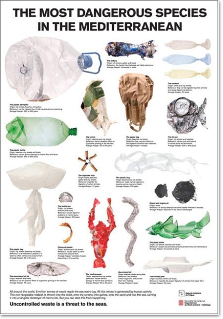 especies-perigosas-oceano-01
